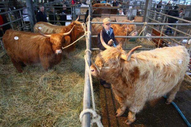 question of scale: Scotland's beef industry  is facing compet