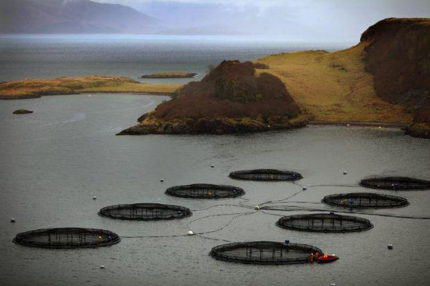 Fish farms are an important rural industry, but their expansion has proved to be divisive Photograph: Jeff J Mitchell/Getty Images