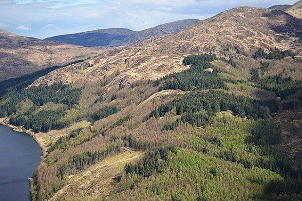 ATTACK: Larch trees cover a large chunk of Scotland's countryside.