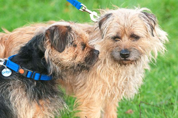 Round of a paws for Scruff who acts as guide dog for blind border terrier son Lucky