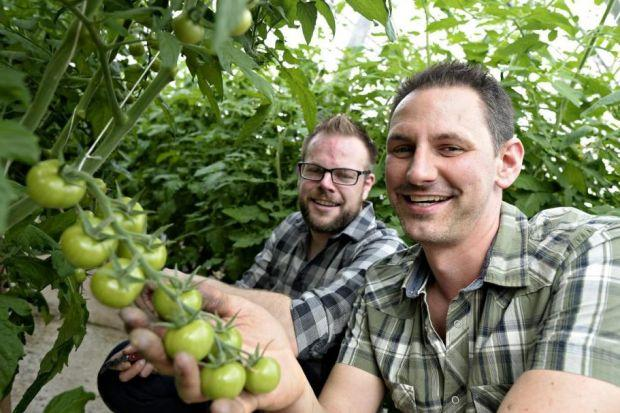 TASTY: David Craig and Scott Robertson secured a loan to expand the business Clyde Valley Tomatoes.