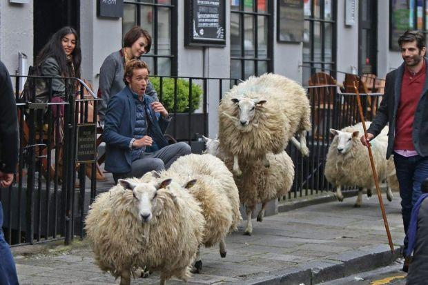 HEIGHT OF FASHION: One of a number of sheep in city for a fashion shoot jumps to it as the visitors caper along, to the bemusement of onlookers. Picture:  Gordon Terris