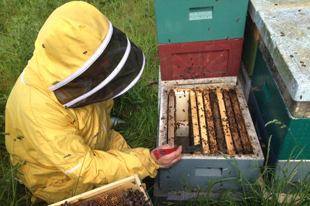 Save our bees - why one Scottish estate is supporting bee keeping and why we should do the same