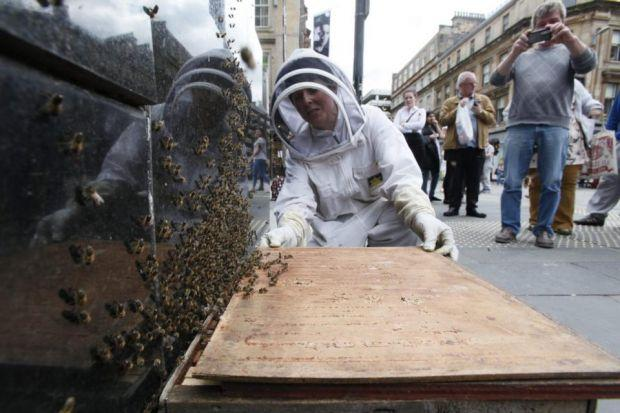 STICKING AROUND: The swarm of honeybees forced passers-by to give them a wide berth.
