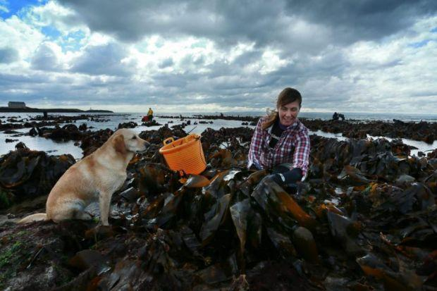 Left: Fiona Houston and her dog Hooly make the most of the low tide on Elie beach in Fife. Top: Mara harvesting manager Rory MacPhee. Above: Vicky Allan on her way to becoming hookedPhotographs: Stewart Attwood