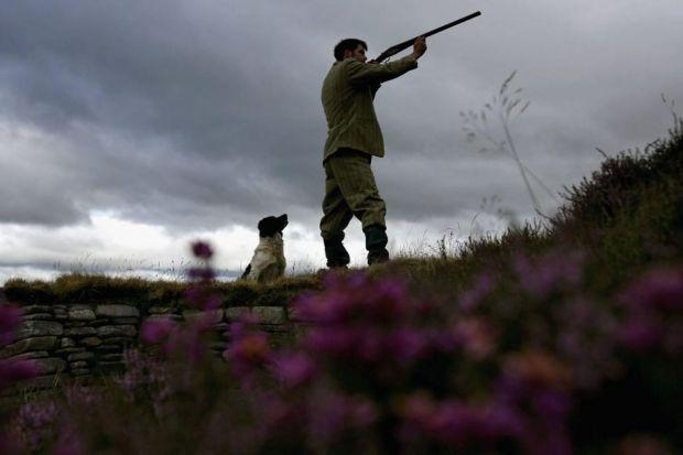 There are concerns that increasing grouse numbers comes at a significant environmental cost