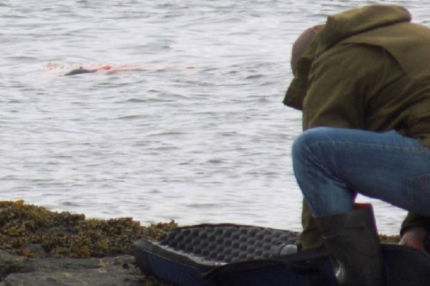 Seal-shooting wars: reports sent to Fiscal