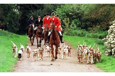 Cameron postpones fox hunting vote after SNP vow to vote against bid to relax laws
