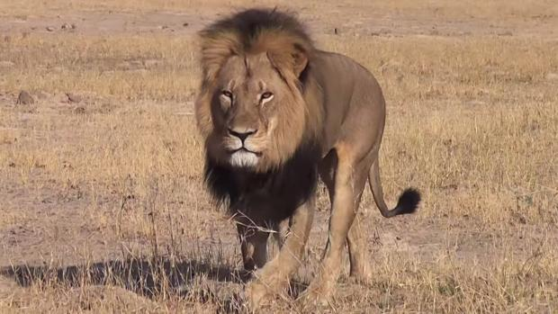 Hunting 'elitism' in Scotland challenged after Cecil killing