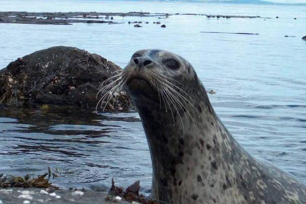 Named and shamed: the Scottish salmon farms shooting seals