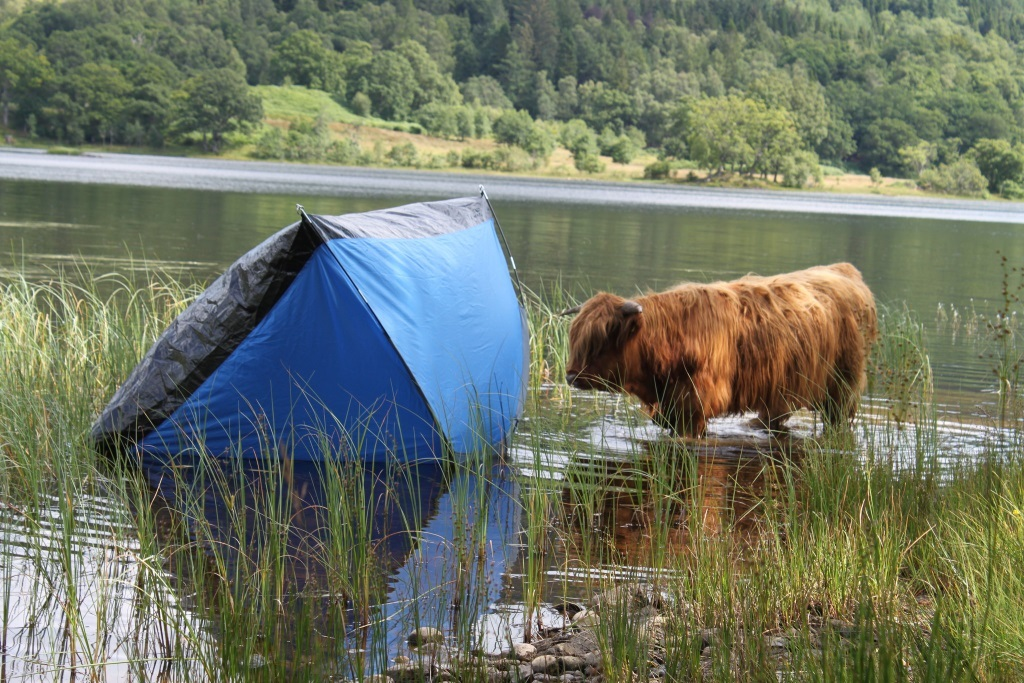 Wild camping has been blamed for increasing amounts of rubbish around the shores of Loch Lomond.