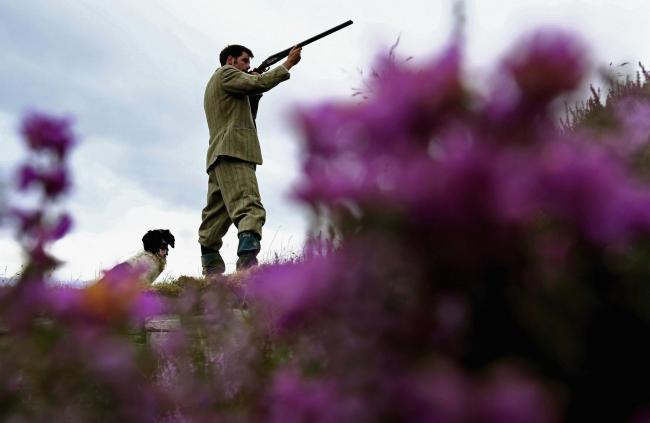 New moves to ban grouse shooting in Scotland
