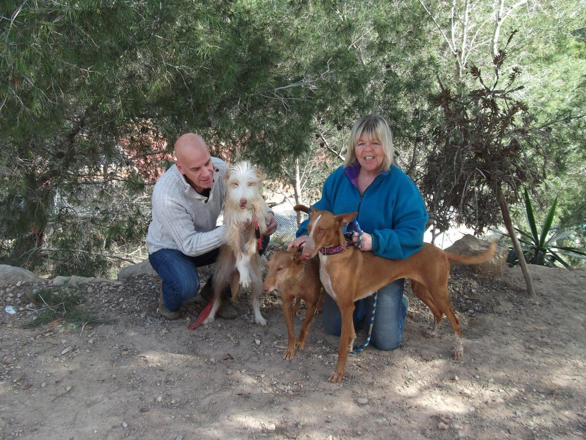 Scots Dog Groomer In Battle To End Barbaric Plight Of Spain S
