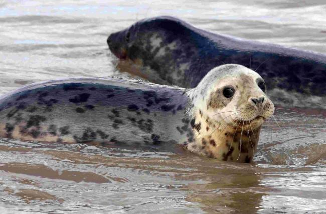 Jet skiers deliberately driving at seals in north-east Fife