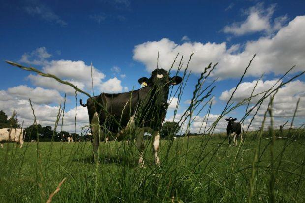 Stranraer-based cheese group behind Seriously Strong cheddar