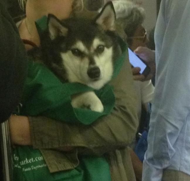 New York City Subway Bans Dogs Unless Theyre In A Bag So - Nyc subway bans dogs unless fit bag new yorkers reacted