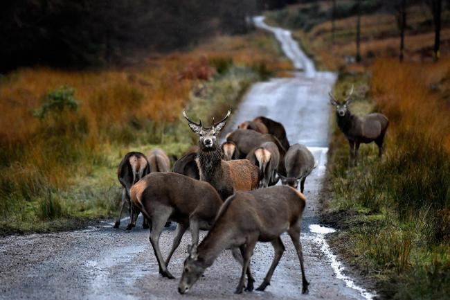 "Assynt crofters ""prepared to go to jail"" over deer cull"