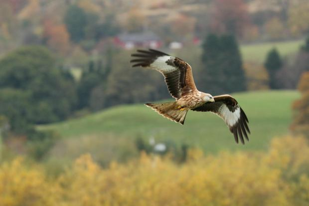 Located on the Galloway Kite Trail, the farm has become a popular spot to  catch the spectacular red kite, a bird of prey which has been congregating  here ...