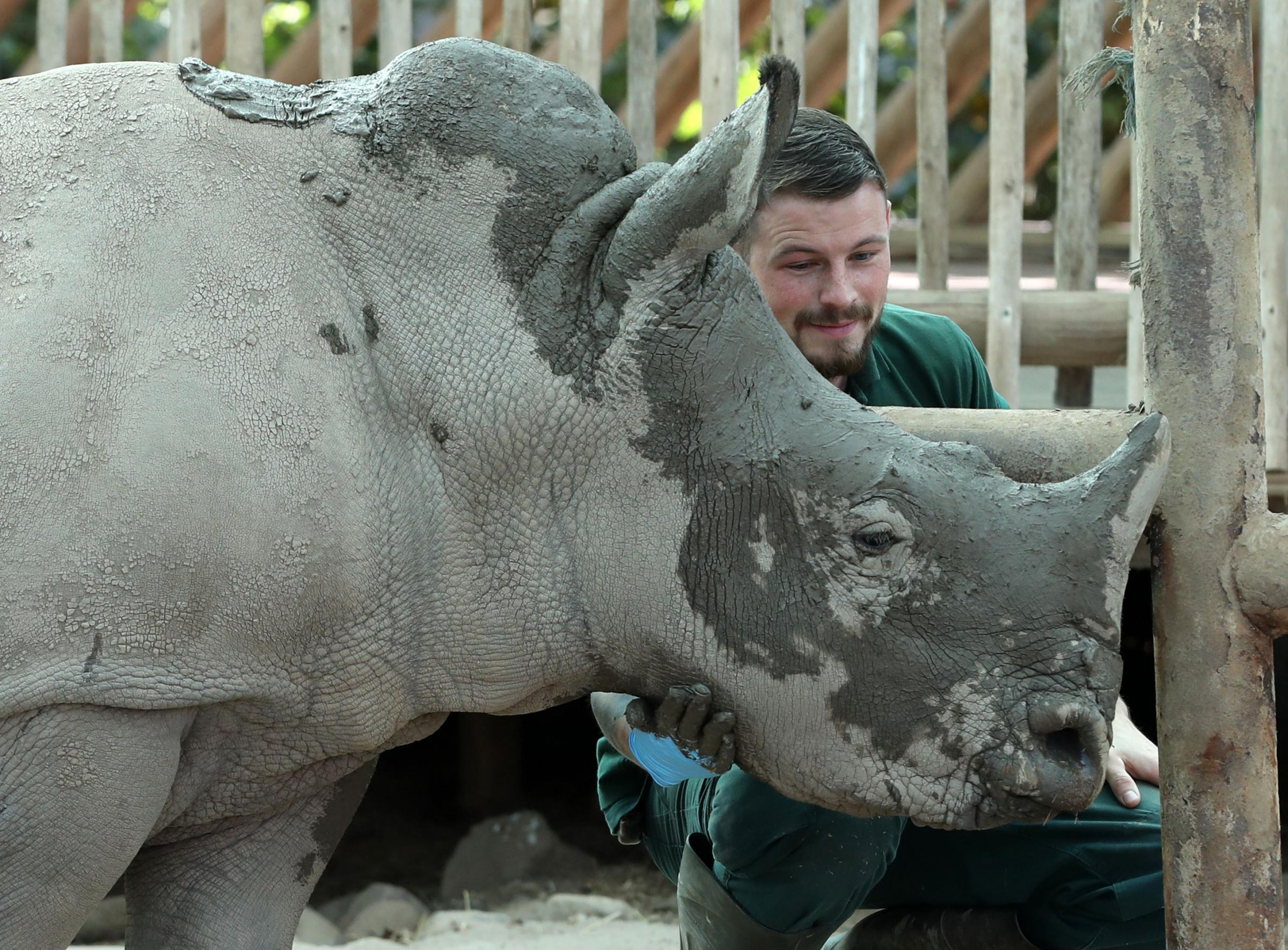Bonnie the rhino celebrates first birthday with mudpack