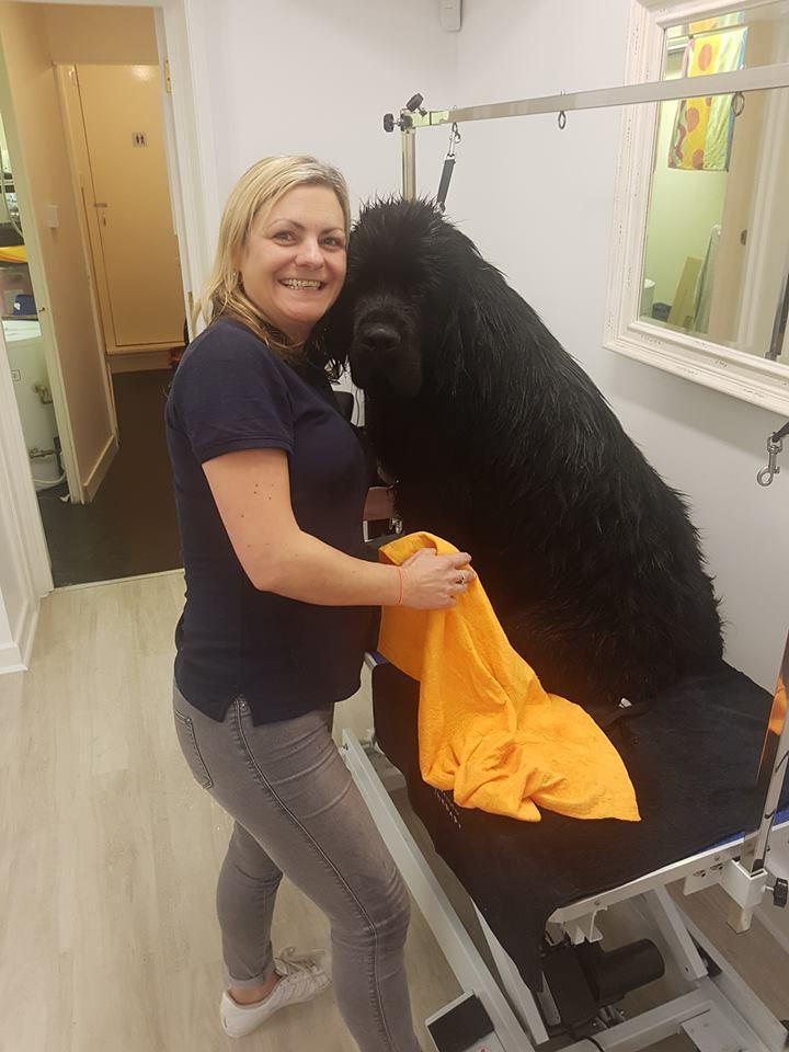 Scamps Professional Pet Grooming Shop Opens In Station Way Cheam