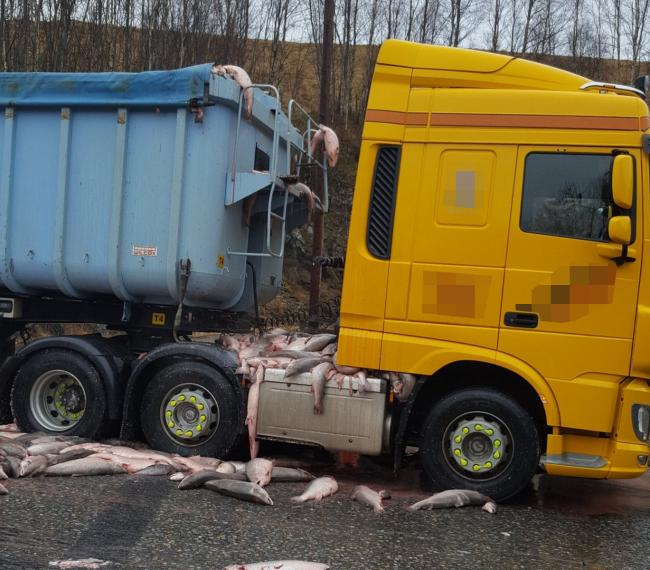 Lorry shed it's load on M9 north of Blair Atholl.