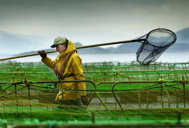 HeraldScotland: Salmon farming provides jobs in rural areas