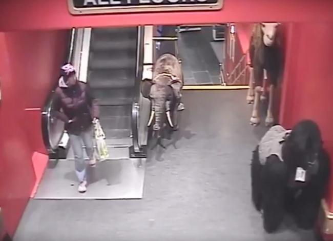 CCTV still issued by Police Scotland of a potential sighting of Karen Brown at Hamleys in London