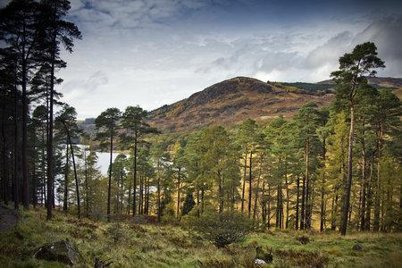 Scotland 'smashes' tree-planting targets as nation's landscape goes  back to woods