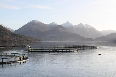 Mowi operates fish farms in Scottish waters
