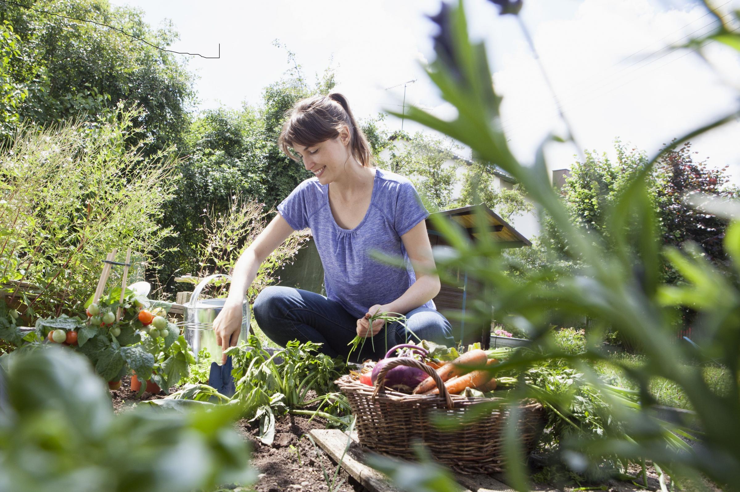 Return of the Good Life: the new craze for front garden allotments    HeraldScotland