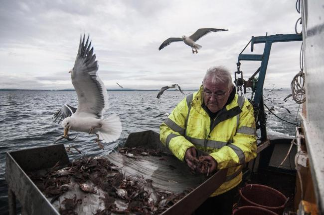 Revealed: Scottish Government bid to exempt salmon farming from US seal-killing ban