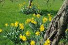 Spring is here, as shown by the lovely spring day taken at Brockhampton Estate  on April 5 by Ruth Pender