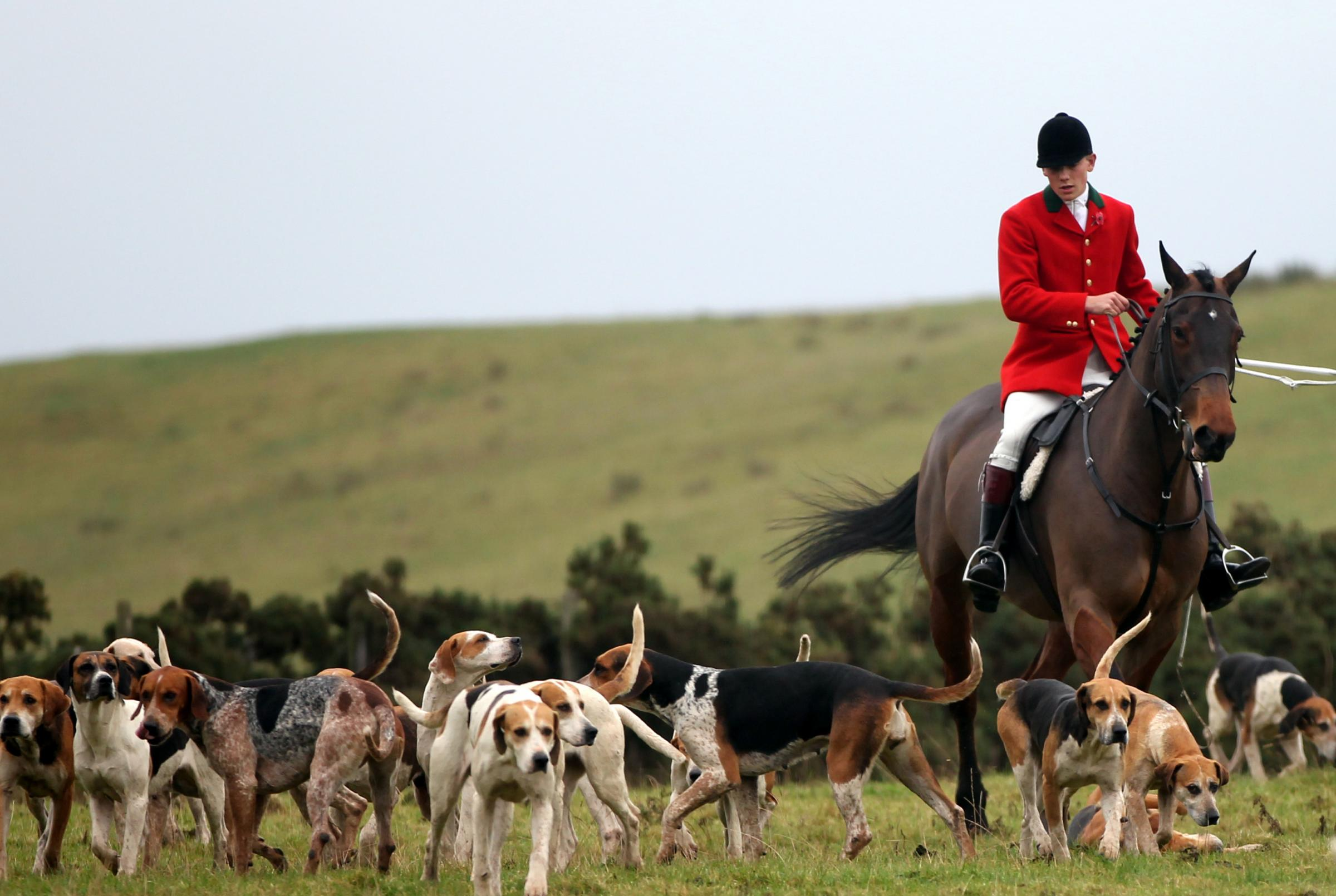 ST BOSWELLS, SCOTLAND - NOVEMBER 08:  Whipper In, Johnny Richardson with some of The Duke of Buccleugh's Fox hounds which he looks after on November 09, 2011 in St Boswells, Scotland.  (Photo by Ian MacNicol/Getty Images).