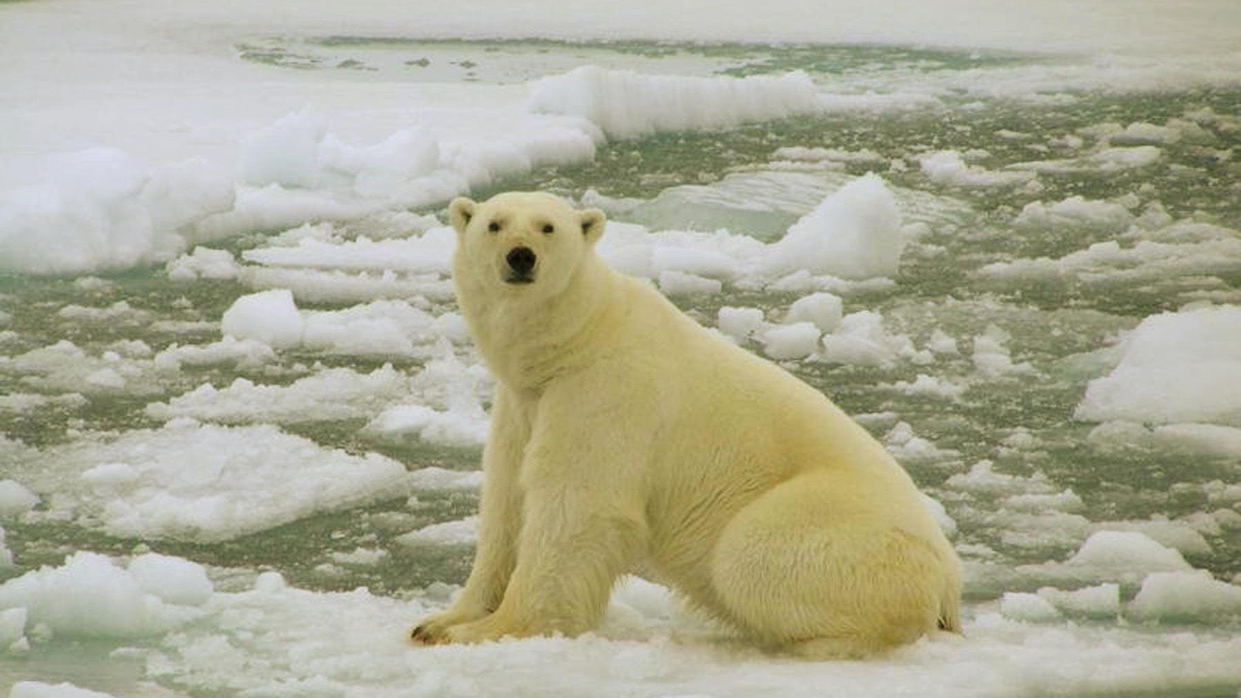 Global warming 'to wipe out' most of animals in protected areas