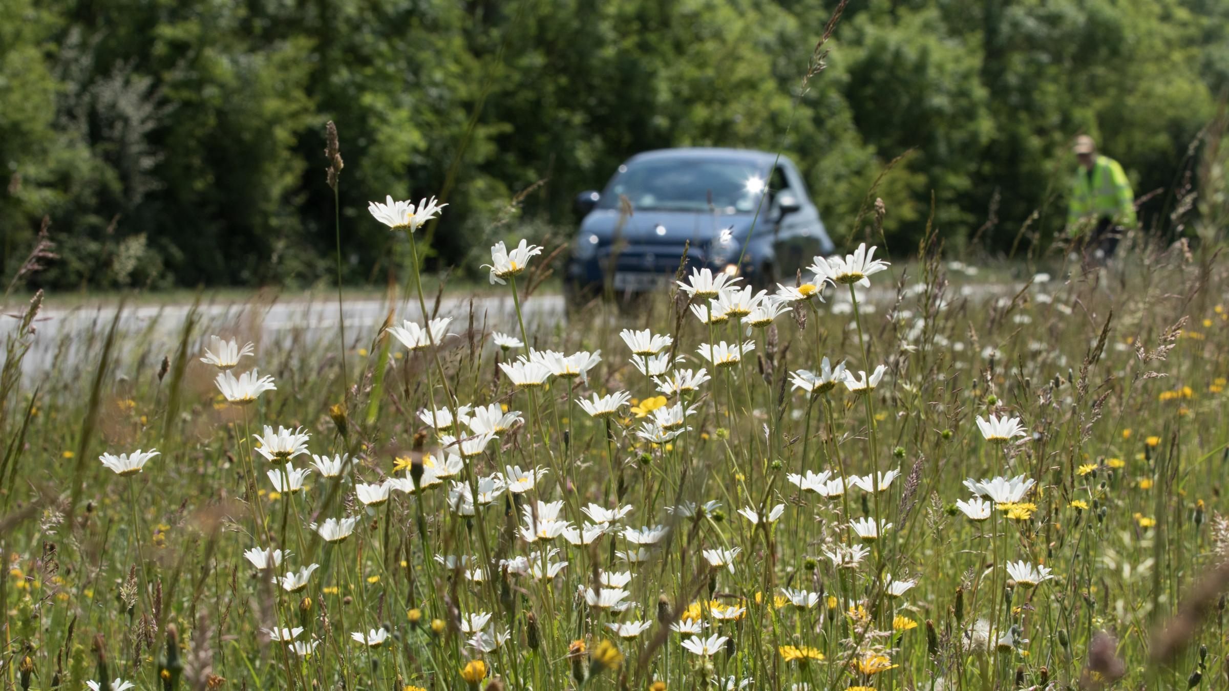 Playground thuggery' as nettles and brambles crowd out flowers on roadsides