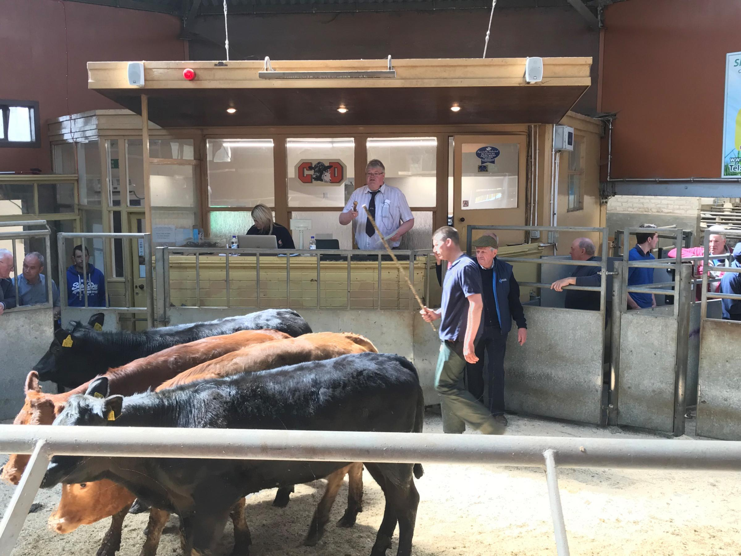 C&D Auction Marts, Dumfries