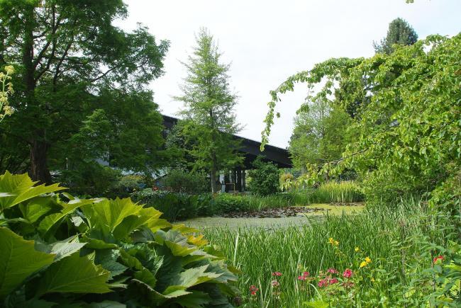 Garden of the week: University of Dundee Botanic Garden, Dundee ...