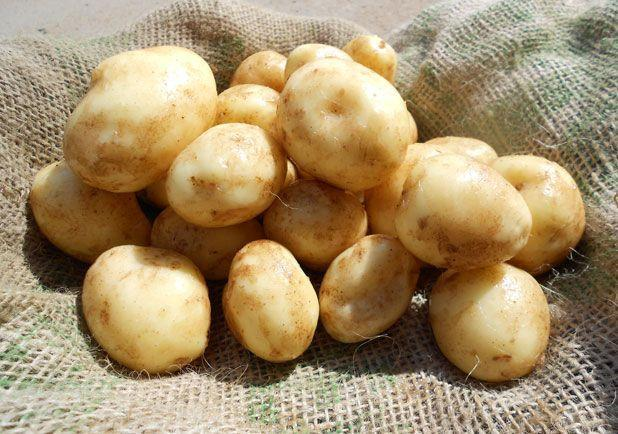 HeraldScotland: Ayrshire New Potatoes