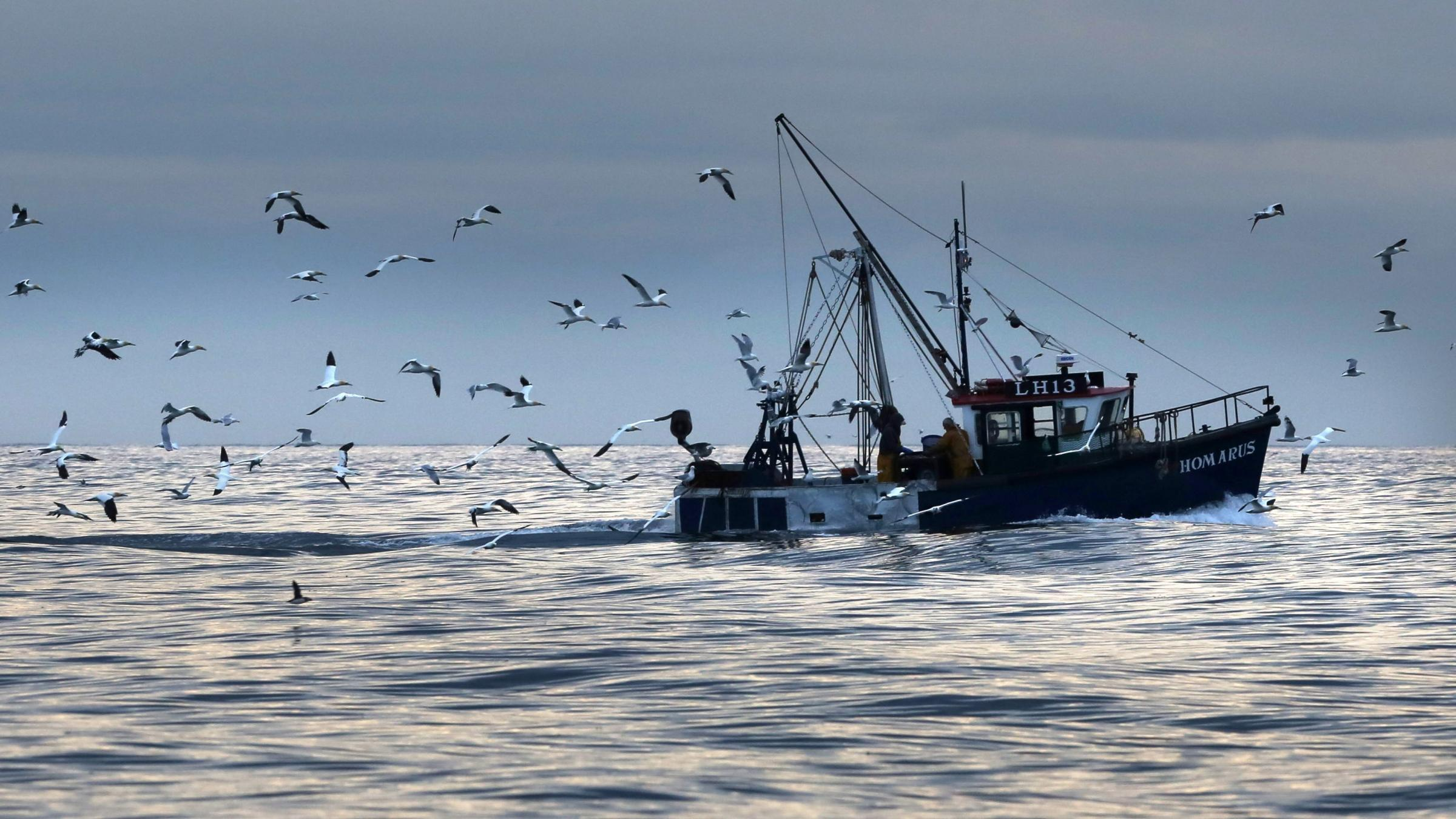 Post-Brexit fishing quota powers should be transferred to Holyrood