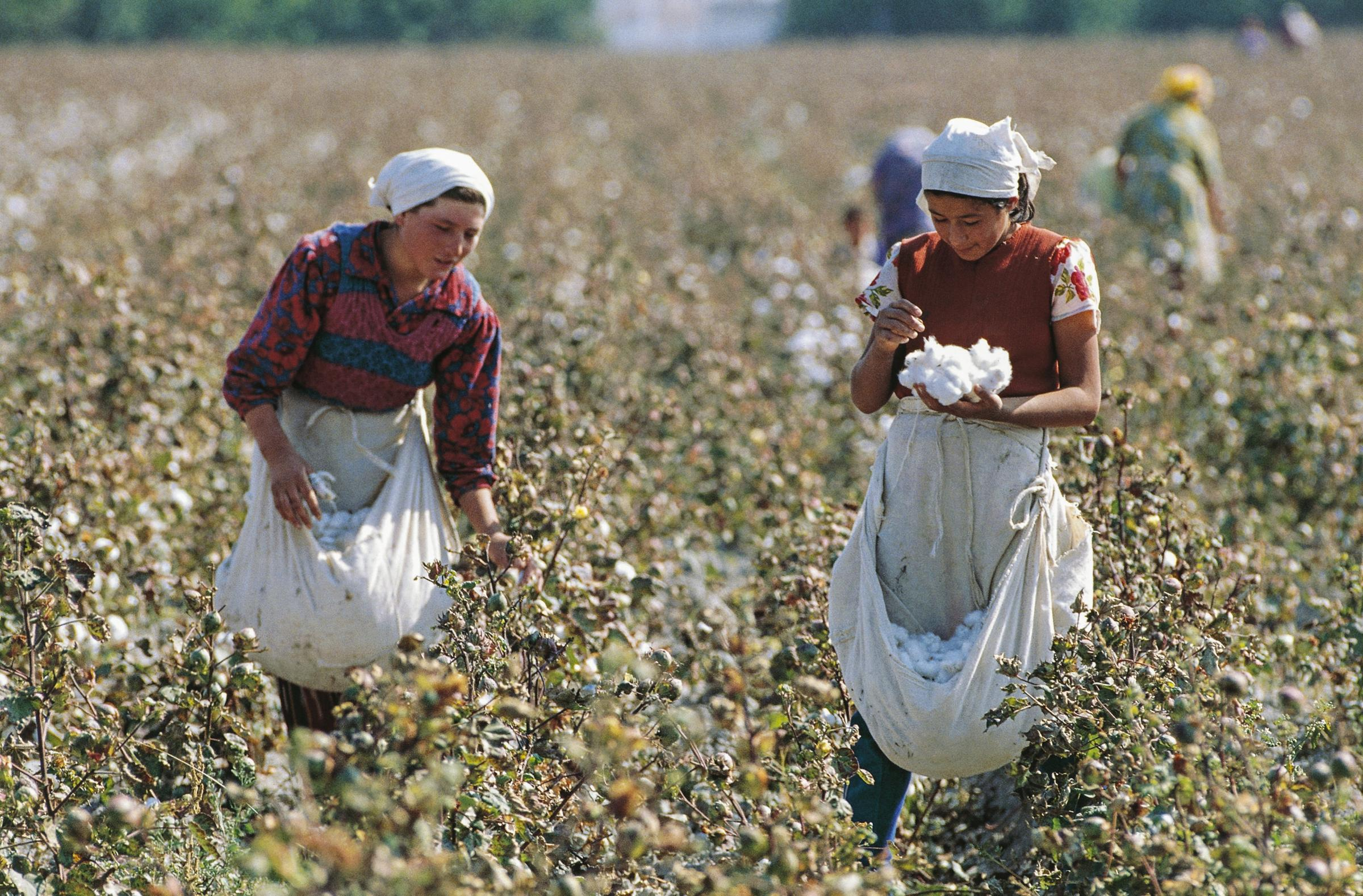 Uzbek cotton workers