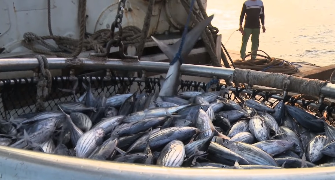 Scots charities warn new post-Brexit measures needed to stop overfishing and protect marine life