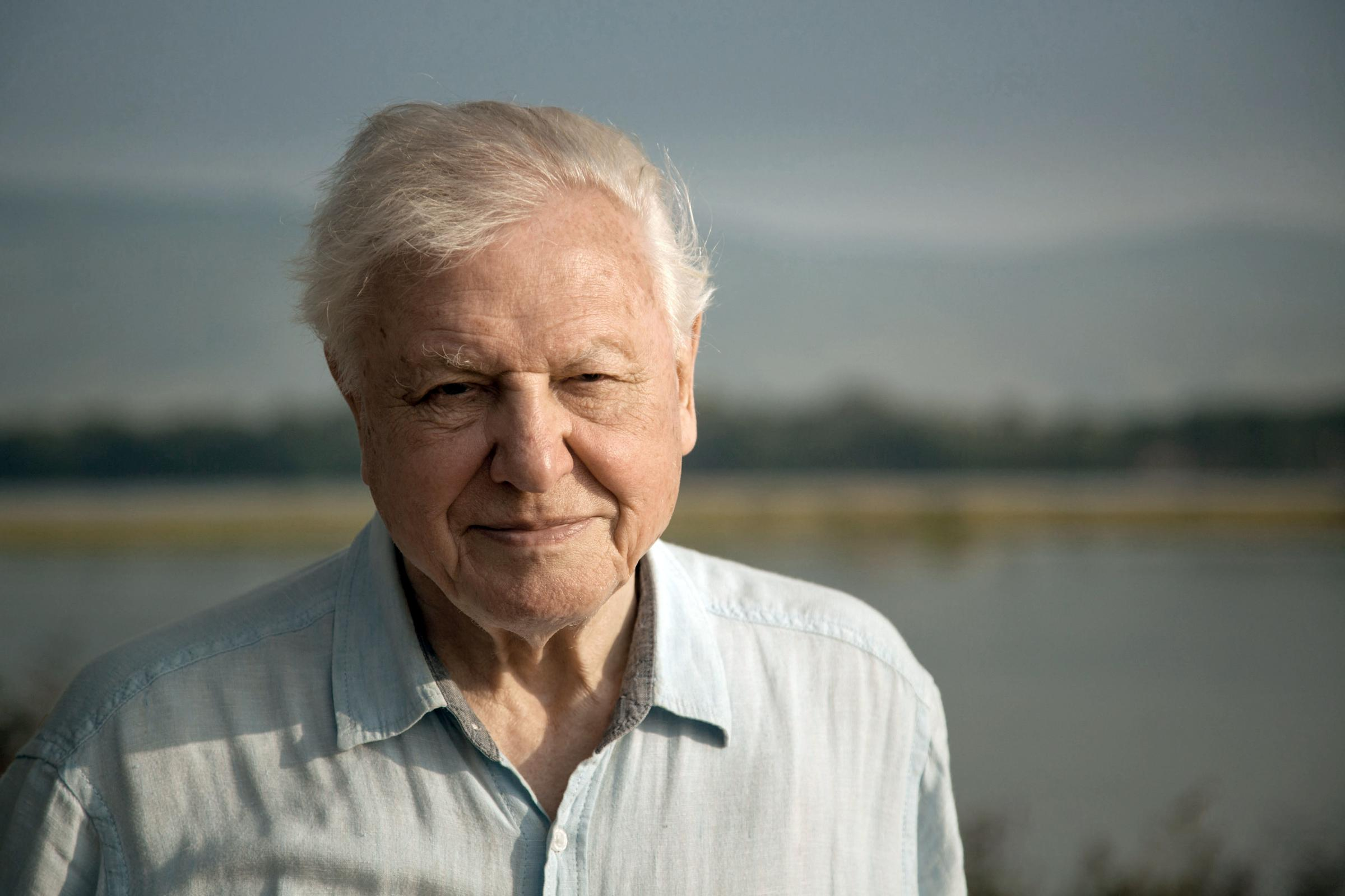 Kelp harvesting bid sparks plea from Sir David Attenborough
