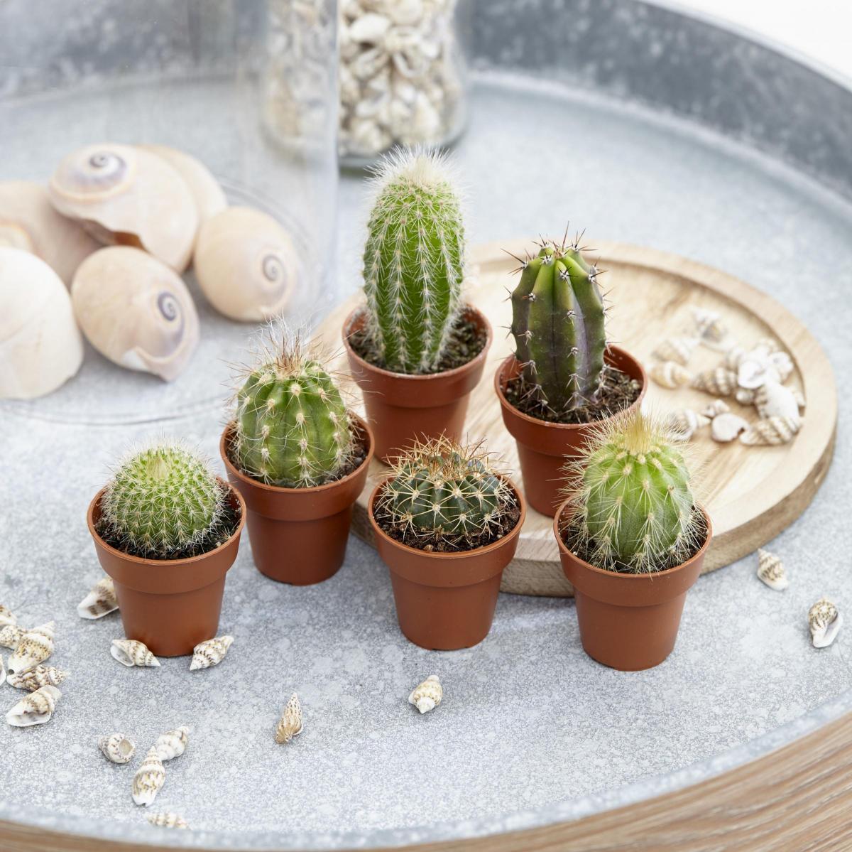 Gardening: Leaf through 11 Christmas gifts for gardeners ...