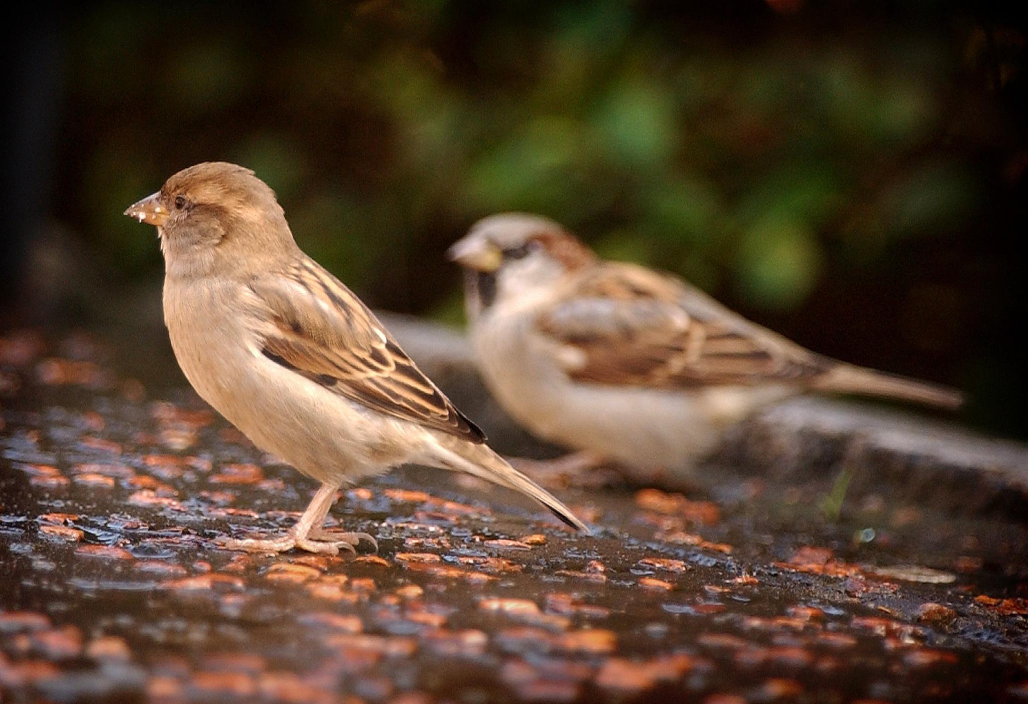 Bird of praise