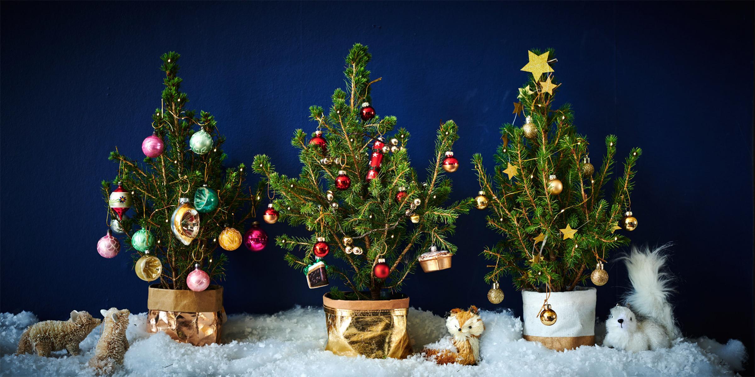 Gardening Six Alternative Christmas Trees For Small Spaces Heraldscotland