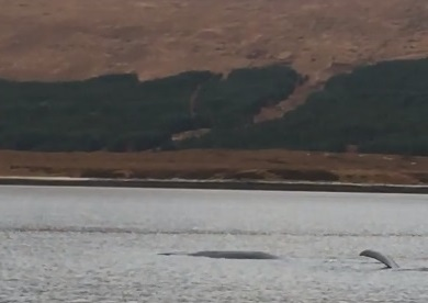 Watch: Distressed sperm whale 'may have freed itself' in Loch Eriboll