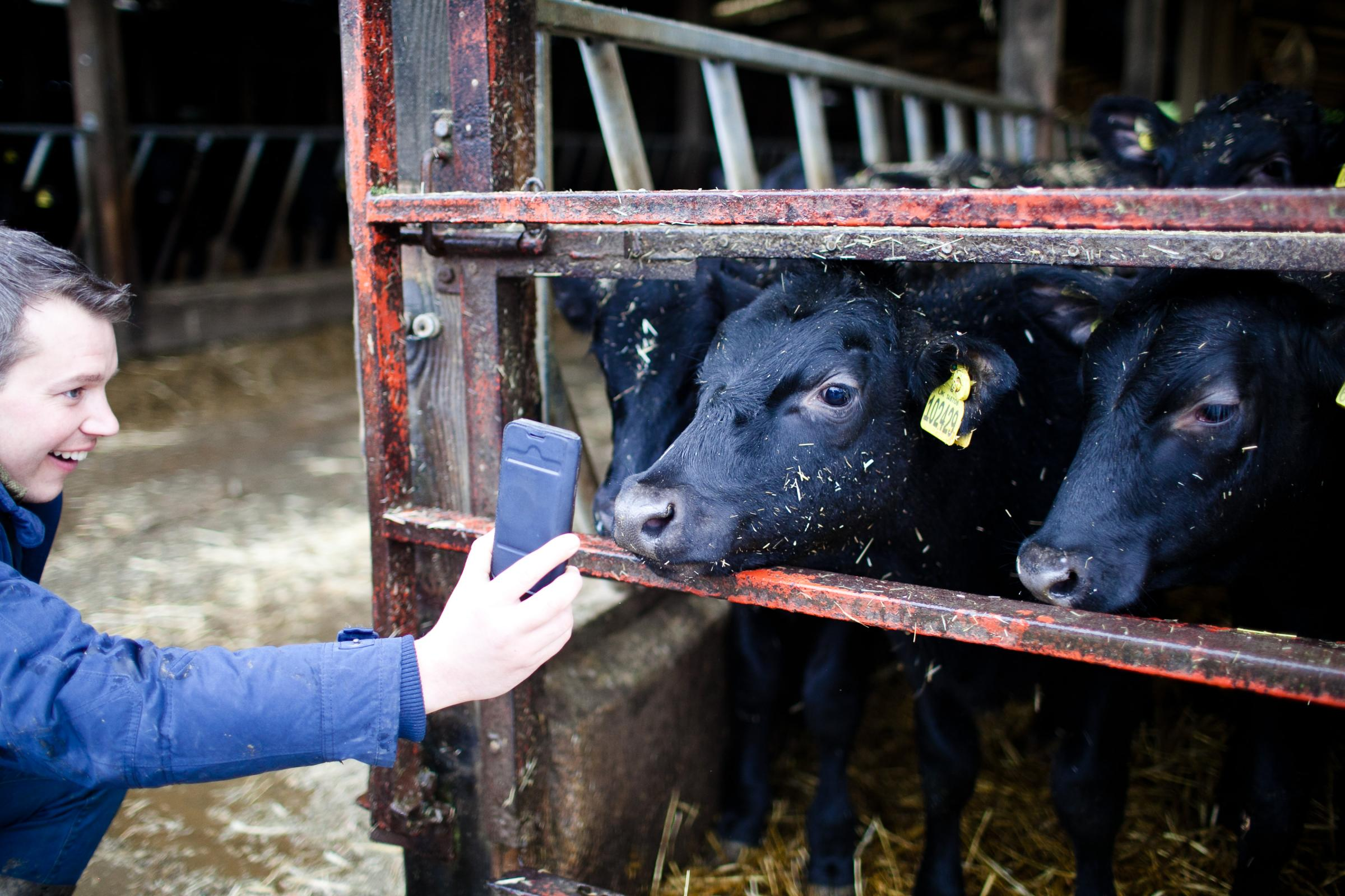 Tudder is a new dating app for cattle