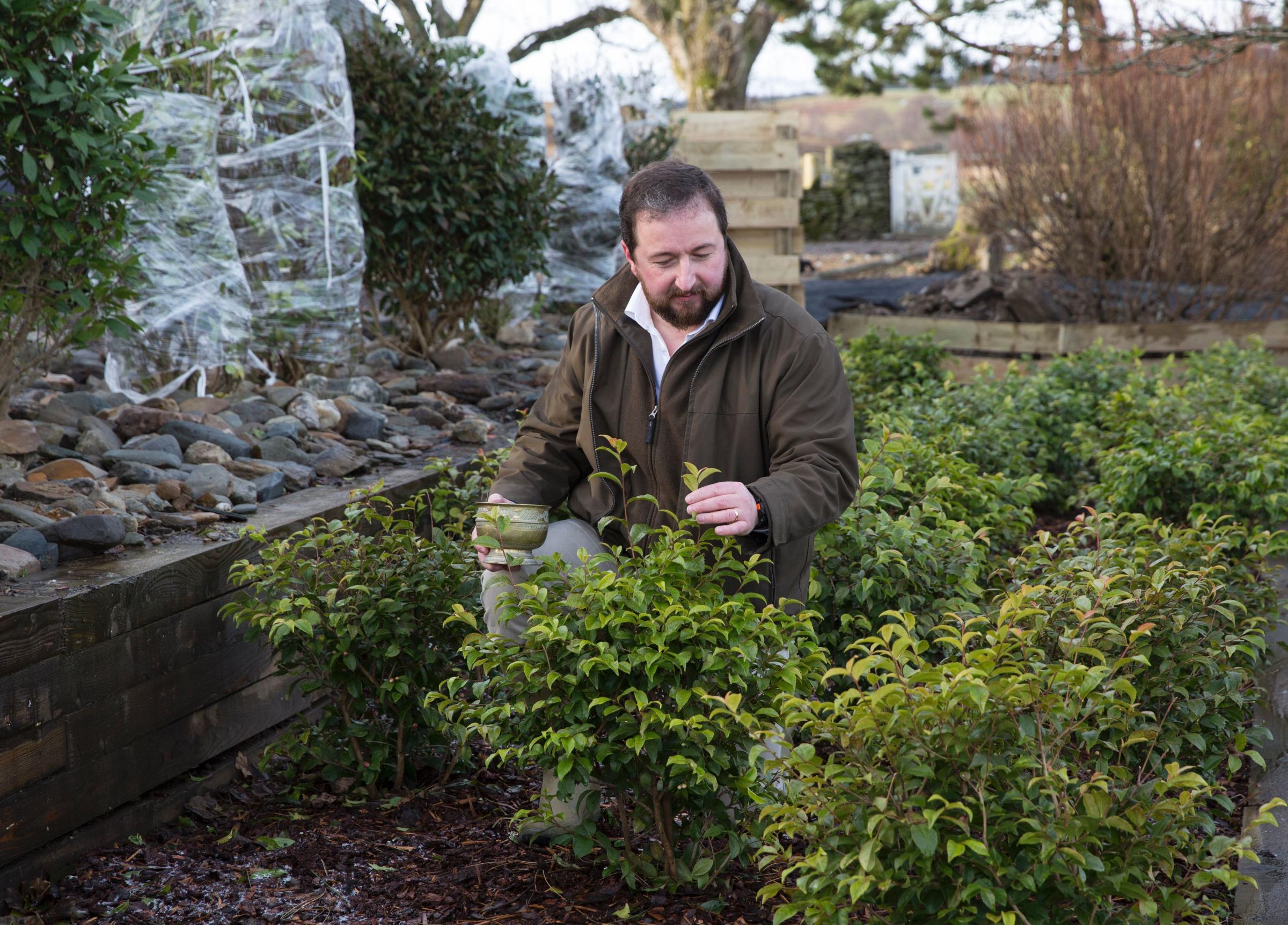 Tam O'Braan at his plantation in Perthshire.