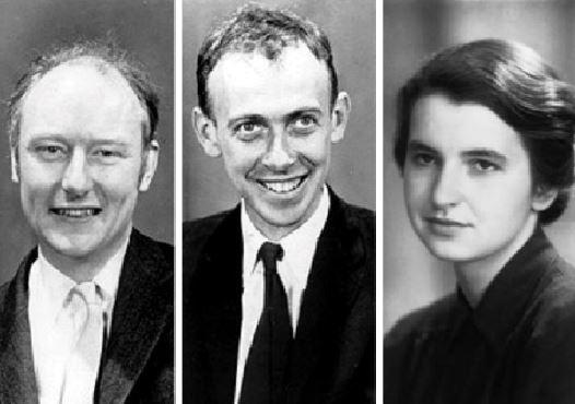 WORKING TOGETHER: James Watson, Francis Crick and Rosalind Franklin who together discovered the structure of DNA.