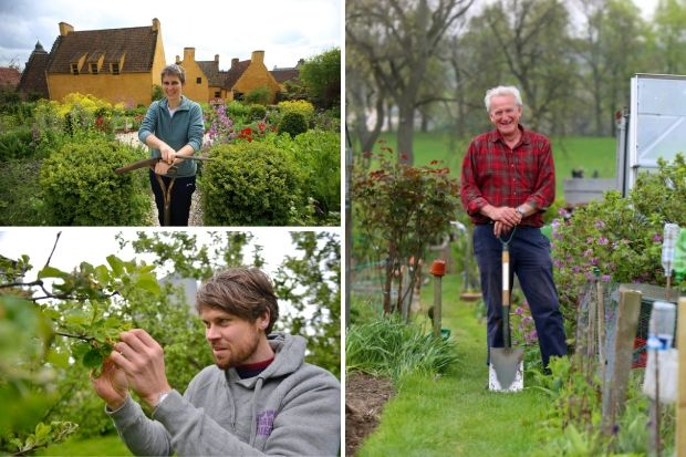 Gardens Special: A palace gardener, allotment grower and orchard specialist share their tips